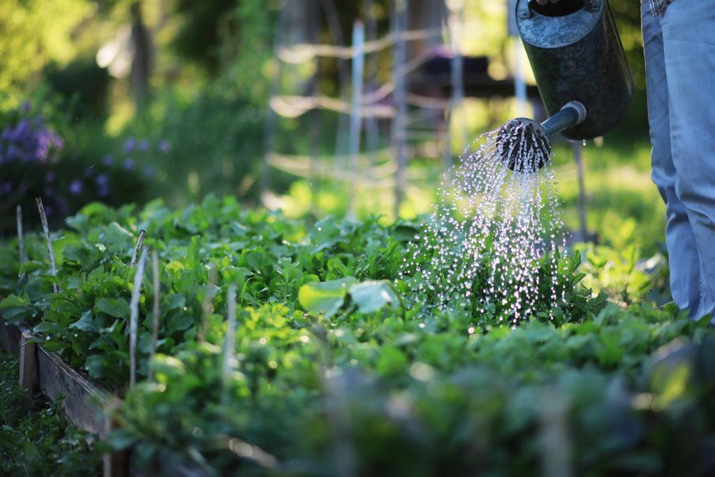 Die Möglichkeiten für Brunnen im Garten sind vielfältig