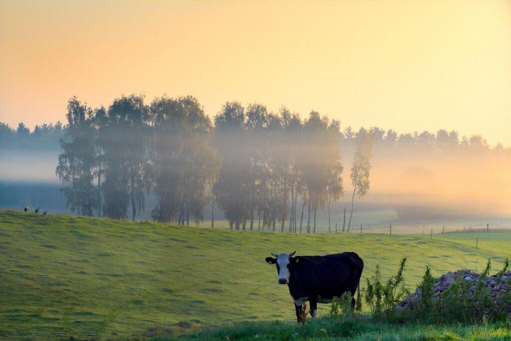 """Mehr als ländliche Idylle: Beim Konzept """"Ökodorf"""" geht es um klare ökologische und soziale Wertvorstellungen."""